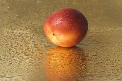 Wet nectarine stock photos