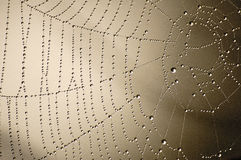 Wet Net (1). Spider web in morning dew royalty free stock photos