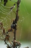 Wet Net 4. Spider web in morning dew royalty free stock photos