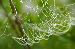 Wet Net 6. Spider web in morning dew royalty free stock images