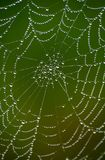 Wet Net 7. Spider web in morning dew stock photos