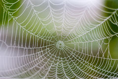 Wet net. Wet web at the morning in december with dew forming Stock Image