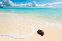 Free Wet Old Coconut On A Deserted Beach With White Sand Against The Stock Photography - 107161832