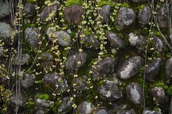 Wet and old mossy aged stone wall background Royalty Free Stock Photo