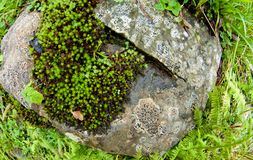 Wet old rocks with moss. Stones and rockes with moss, wet, solid and massive. Good as background Stock Images