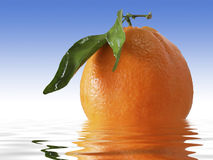 Wet Orange. Fresh looking orange with reflection in water Royalty Free Stock Photography