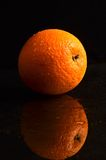Wet orange on a black background Stock Images