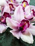 Wet orchids Royalty Free Stock Photo