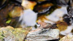 Wet Owl Finch Bird Stock Photos