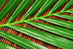 Wet palm leaves. Close up of wet palm leaves on a bamboo mat Royalty Free Stock Image