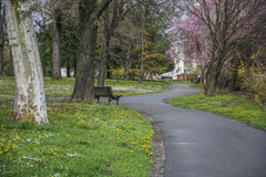 Wet park path with bench in nature. With green grass Stock Photography