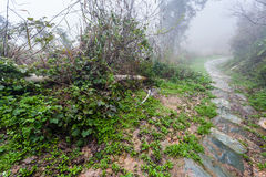 Wet path in forest in rainy misty spring day. Travel to China - wet path in forest in rainy misty spring day in area of Dazhai Longsheng Rice Terraces (Dragon's Royalty Free Stock Photo