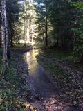 Wet path. A path in the forrest after the rain Stock Image
