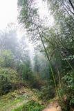 Wet path in mist rainforest in area of Dazhai Stock Photos