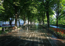 Wet path through the morning park. First sun rays go through the trees Stock Photography