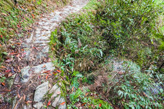 Wet path on mountain slope in Dazhai country. Travel to China - wet path on mountain slope in Dazhai country of Longsheng Rice Terraces (Dragon's Backbone Stock Photos