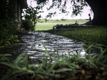 Wet path. Way leading into a home. Focus is on the walkway.  A Statue in the distance under a tree Royalty Free Stock Photo