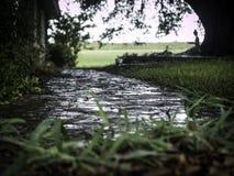 Wet path Royalty Free Stock Photo