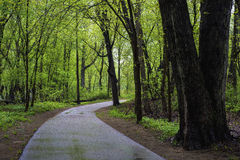 Wet path, spring. A path winds through a spring forest in rum river central regional park, minnesota Royalty Free Stock Photography