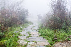 Wet path in Tiantouzhai village in spring Stock Image