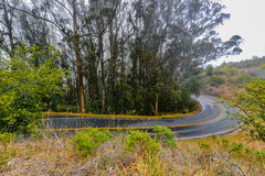 Wet paved road winds by eucalyptus trees Stock Image