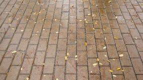 Wet pavement Royalty Free Stock Image