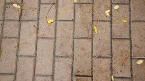 Wet pavement Royalty Free Stock Images