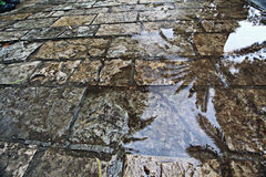 Wet pavement stones Stock Photography