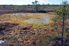 Wet peat on a bog. Royalty Free Stock Image