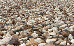 Wet pebble in perspective Stock Photography