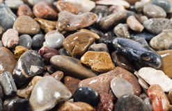 Wet pebble stones , background. Background of wet stones (small depth of sharpness Royalty Free Stock Photography