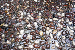 Wet pebbles. Pebbles  pavement  wet from the rain Stock Images