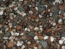 Wet pebbles as background Stock Photography