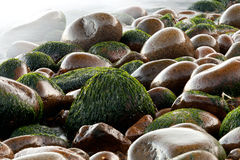 Wet pebbles on beach. With blurred ocean, Maine, USA Stock Photo