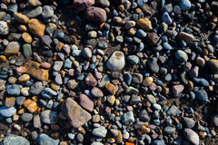 Wet pebbles on beach Royalty Free Stock Photography