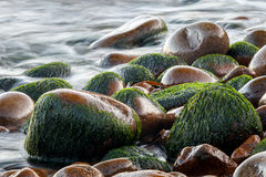 Wet pebbles with blurred water. Wet pebbles on beach with blurred ocean, Maine, USA Royalty Free Stock Photography