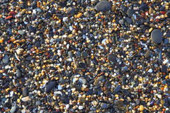 Wet pebbles and shells background. Topview shot of pebbles washed ashore at a beach of the Australian east coast. Some seashells in between royalty free stock images
