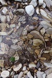 Wet pebbles. Under water river Stock Photography