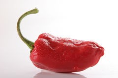 Wet pepper. One red pepper woth drops of water in a isolated background Royalty Free Stock Photo