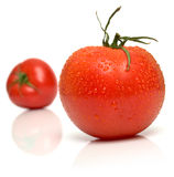 Wet perfect tomato Royalty Free Stock Photo