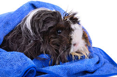 Wet pet close-up Stock Image