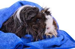 Wet pet close-up Stock Image