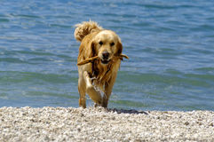 Wet pet - dog Royalty Free Stock Images