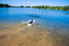 Wet Pet Stock Photo