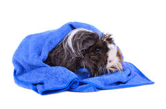 Wet pet Stock Photos