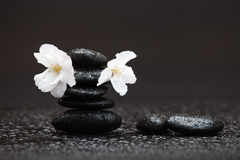 Wet pile of black pebbles Royalty Free Stock Image