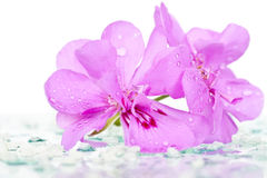 Wet pink flower Royalty Free Stock Images