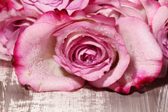 A wet pink Rose. A closeup of a wet Pink Rose  on wooden background Stock Image