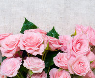 Wet pink roses on a gray linen fabric. Bouquet of wet pink roses on a gray linen fabric, close-up Stock Image
