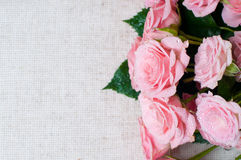 Wet pink roses on a gray linen fabric Stock Photos